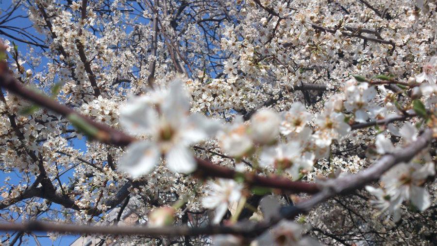 lažno-proleće---sunčan-dan